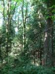 2010 East Gaglardi Trail - proposal