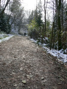 Stoney Creek, Snowy Walks